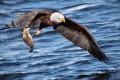 吃屍體的老鷹不能表象爲上帝嗎?