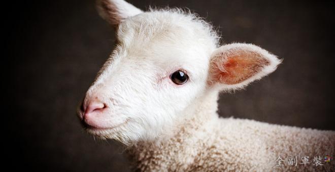 羔羊的妻-母親上帝